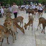 More deers