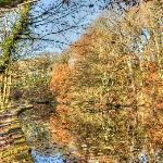 Rivelin Valley Nature Trail Foto