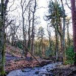 Limb Brook