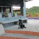 The pool and adorable Chucho dog