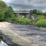 One of the Weirs - how did that fish get there?