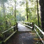 wooden bridge/walkway