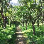 Path through the Garden to Town