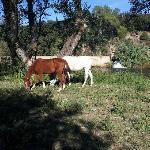 El rio frente a la casa y los caballos