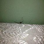 Ragno dietro il letto
