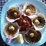 Capesante shells