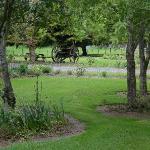 Rambling gardens to enjoy at Soap Company