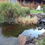 Koi pond at the hotel