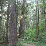 trail #742 salmon river˦ huckleberry wilderness Jpv