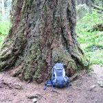 trail # 742 salmon river trail old growth next to river