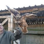 Great Eagle Owl
