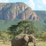 Elephant against backdrop of Waterberge