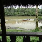 vue de la chambre sur le Rio Napo