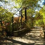 Arbor Hills Nature Preserve trails