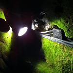 Moos in elf Metern Tiefe