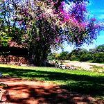 Motswari grounds
