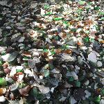 Abundant sea glass