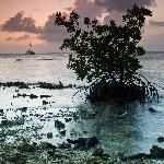 Sunset at Whipray Caye.