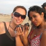 Liberación de tortugas en La Barra de Coyuca