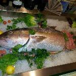 Ricciola Pescata 14 kg