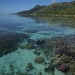 Le jardin de corail (près des pilotis)