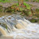 River Porter, in Endcliffe Park