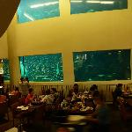 Oceanarium Restaurant in Pacific Beach Hotel.