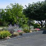 Corner garden 2012