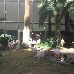Live flamingos outside the Flamingo Hotel