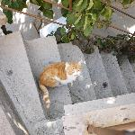 Nice cat, comes to eat every morning