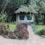 Out View of one of the tents in Miti Mingi Eco