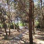 pineta limitrofa c.a. 5 km
