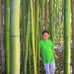 Reese in the bamboo forest