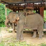 Village des éléphants