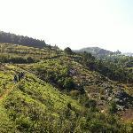 View#6 - Trekking
