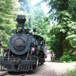 Skunk Train Tours