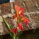 Flores estacionales