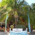 Matachica