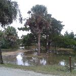 This site was vacated after the 1st flooding incident...no others available to the camper (!)