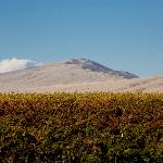 Kiona Estate vineyard and Rattlesnake Mountain