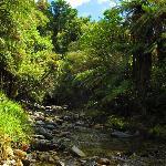 Native Punga and fern bush walk