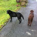 The hotels two dogs