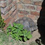 Mit Schildkröte
