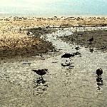 sandbar guests