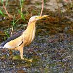 Kirmitli Bird Sanctuary