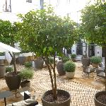 The relaxing courtyard and orange trees.