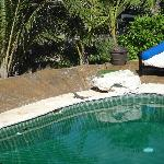 Iguana's sunning themselves by the pool