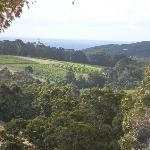 view to smiths beach
