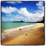 Beach @ Palm Cove