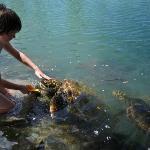 Hand feeding turtles on tour